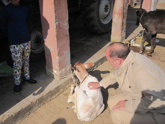 Virsa Travels: Village farm visit