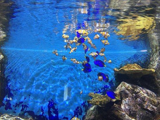 photo3.jpg - kuva: Rayong Aquarium, Rayong - TripAdvisor