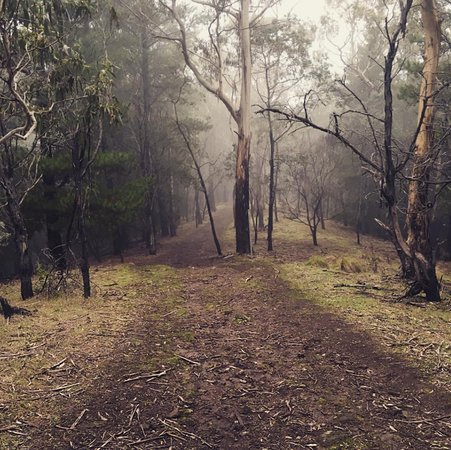 Hepburn Springs, Australia: Walked/trekked to the top of Mount Franklin