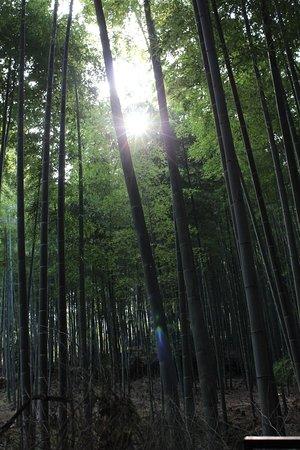 Matsubaya Inn: Bamboo Forest - Nearby highlight