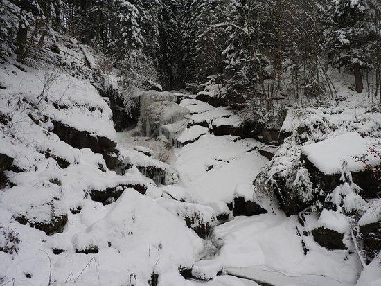 Triberger Waterfall: Waterfall