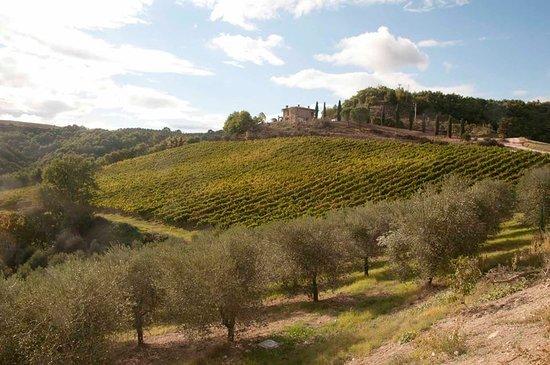 San Venanzo, Italia: Fattoria di Monticello nasce tra le verdi colline umbre, a metà tra le province di Terni e Perug