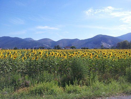 MLF Tuscan Tours