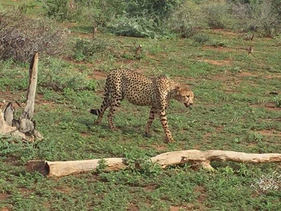 Etali Safari Lodge: photo2.jpg