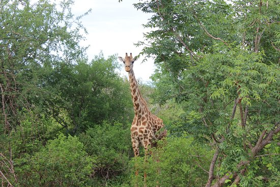 F. King Tours and Safaris - Day Tours: Tsavo East and West