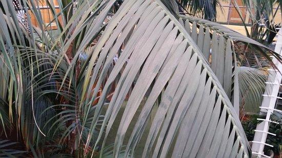Queanbeyan, Australia: plants inside the hotel
