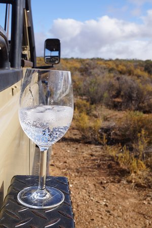 White Lion Lodge: Sundowner auf Safari