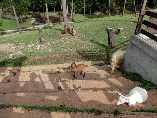 Tajima Ranch Park