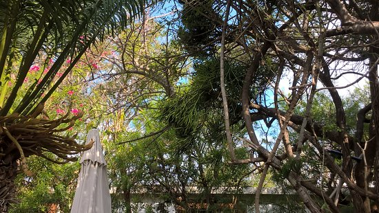 Частный заповедник Балуле, Южная Африка: Next to the pool area. Monkeys were everywhere. (on this foto you can not see them)
