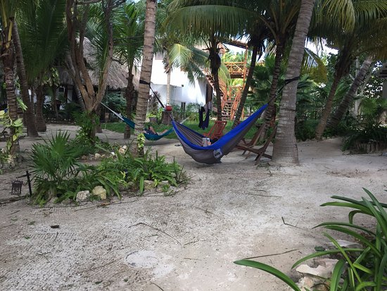 Zomay Hotel Holbox: Plenty of trees for hammocks. There are some hanging already as well.
