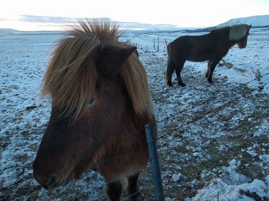 Grindavík, Islandia: IMG_20170111_144740_large.jpg