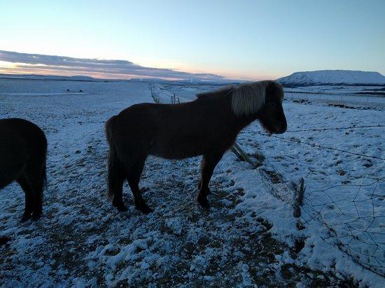 Grindavík, Islandia: IMG_20170111_144803_large.jpg