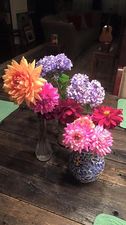 Flowers from the 2016 garden at Deer Island Manor