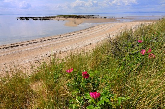 Longniddry, UK: Beach