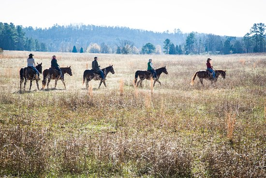 Adairsville, GA: Explore the wilds of Barnsley Resort on horseback, riding through the open fields and wooded tra
