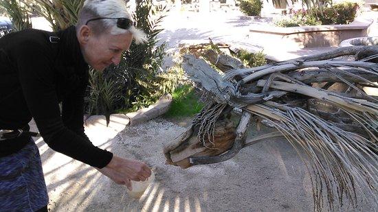 Yuma, Arizona: Even palm frond horses like date shakes!