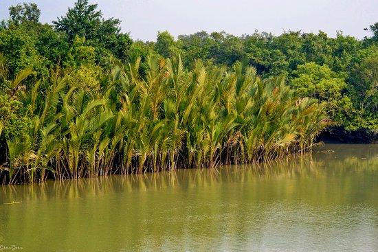 The Sundarbans