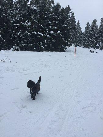 Dog on the snowy mountain in Parnassos, Kelaria