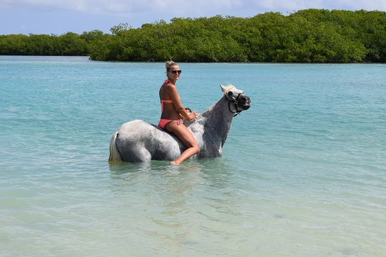 Horse Ranch Bonaire : Hello there