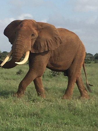 Thomas Tours & Safaris - Private Day Tours : photo0.jpg