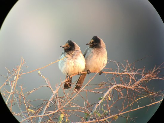 Malelane, Sydafrika: photo2.jpg