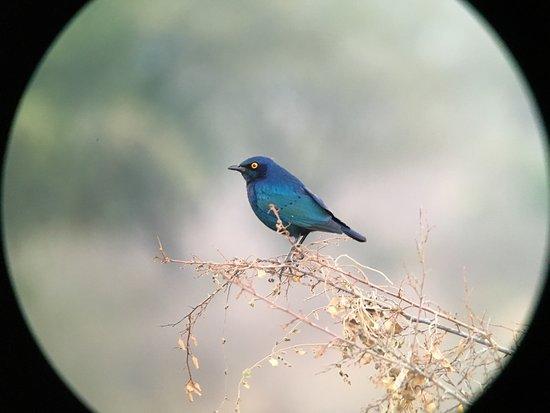 Malelane, Sydafrika: photo4.jpg