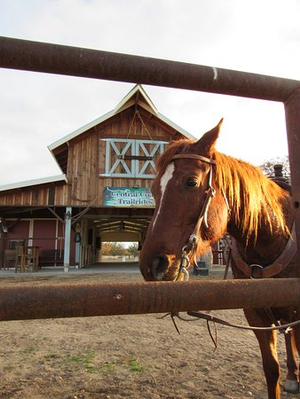 Creston, CA: My horse Chili Pepper