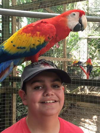 Sandy Bay, Honduras: My son and the parrot before he ate the top of the cap thing