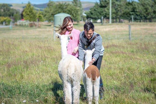 Fairlie, New Zealand: Feeding