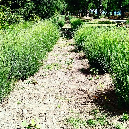 Los Olivos, CA: Clairmont Farms