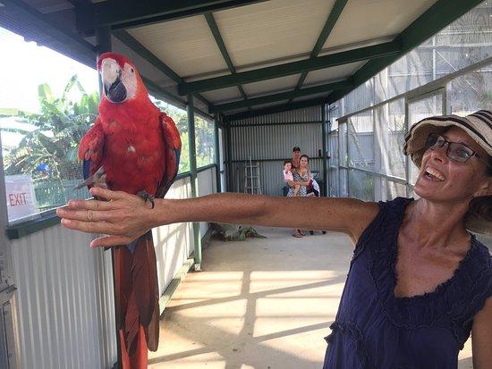 Maleny, ออสเตรเลีย: photo6.jpg