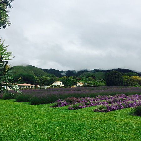 Otaki, New Zealand: Lavender Creek Farm