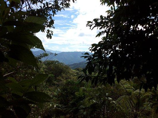 Playa Matapalo, Costa Rica: Vista a la montaña