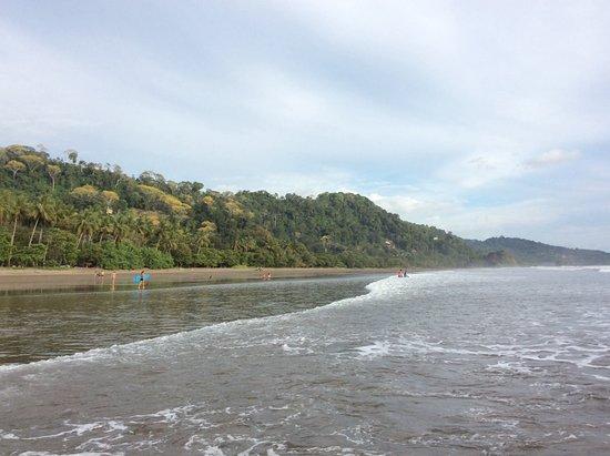 Playa Matapalo, Коста-Рика: Y el verde...