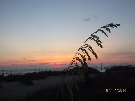 Venice, FL: I really love going to this area to watch the sunset and capture the foliage in my photographs.