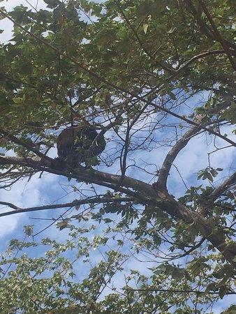 Tola, Nicaragua: monkeys