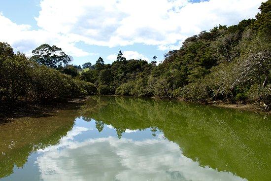 Matakana, Nueva Zelanda: The river flows though native bush, farmland and mangrove environment