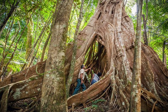 Giant fern park in New Caledonia