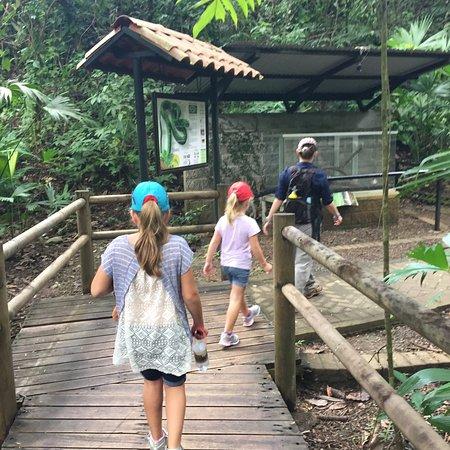 Rainforest Adventures : More amimals