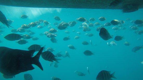 Περιηγήσεις με υποβρύχιο