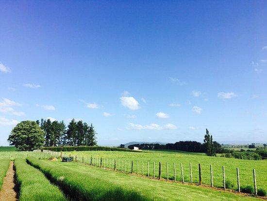 Te Awamutu, Selandia Baru: photo0.jpg