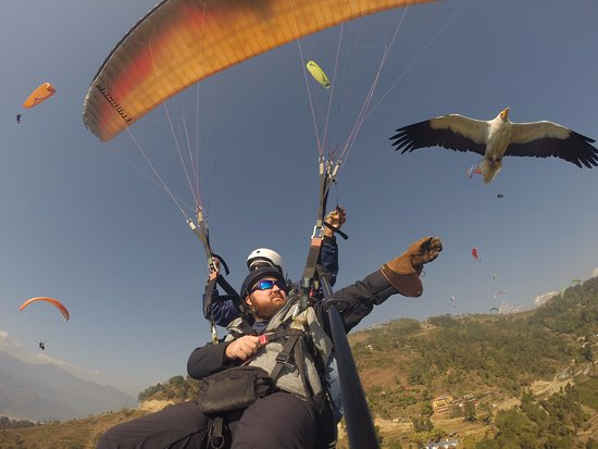 Parahawking: We each fed Kevin more than a handful of times