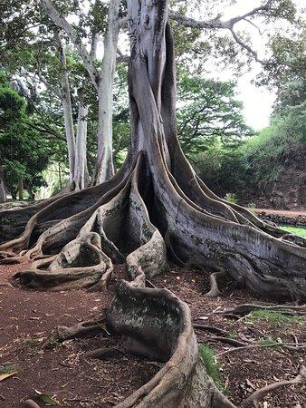 National Tropical Botanical Garden : photo0.jpg