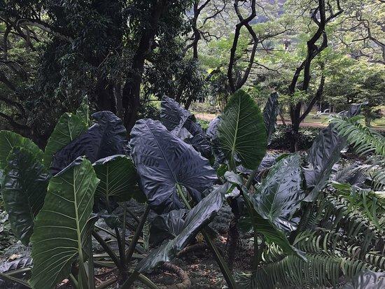 National Tropical Botanical Garden : photo1.jpg