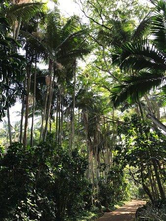 Picture Of National Tropical Botanical Garden Poipu Tripadvisor