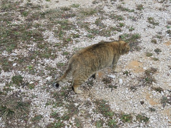 Drnis, Croatia: Fat cats in Etnoland