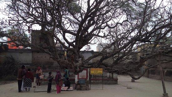 Mayapur, الهند: Chand Kazi Samadhi - 1