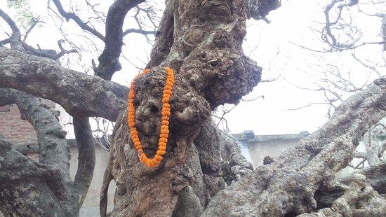 Chand Kazi's Samadhi: Chand Kazi Samadhi - 3