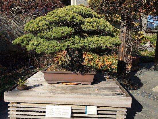 U.S. National Arboretum: bonsai