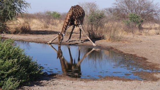 Zdjęcie Central Kalahari Game Reserve